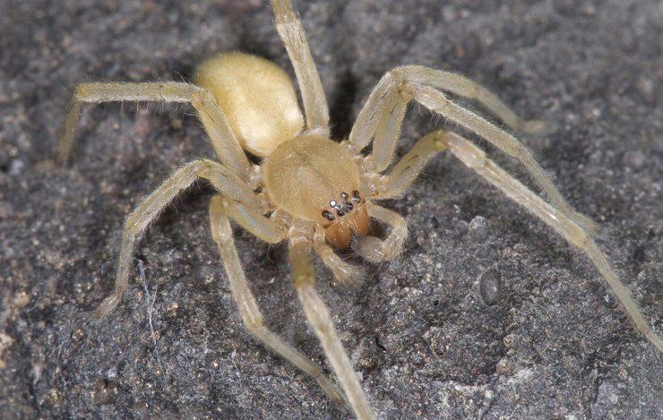 Spinnenbefall bei Mazda-Automobilen (Bild: Joseph Berger, Wikimedia, CC)
