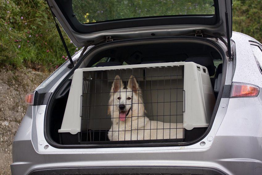 Hundetransportbox ist eine sichere Möglichkeit. (Bild: Marcella Miriello / Shutterstock.com)