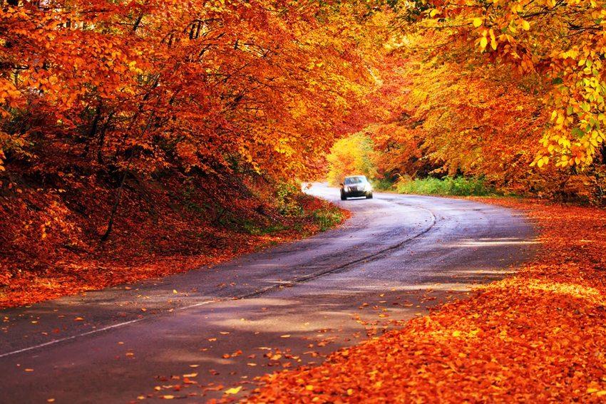 Bei Herbstfahrt in waldreichen Gebieten ist erhöhte Vorsicht geboten, da Hochwild in dieser Jahreszeit bejagt wird. (Bild: SSokolov / Shutterstock.com)