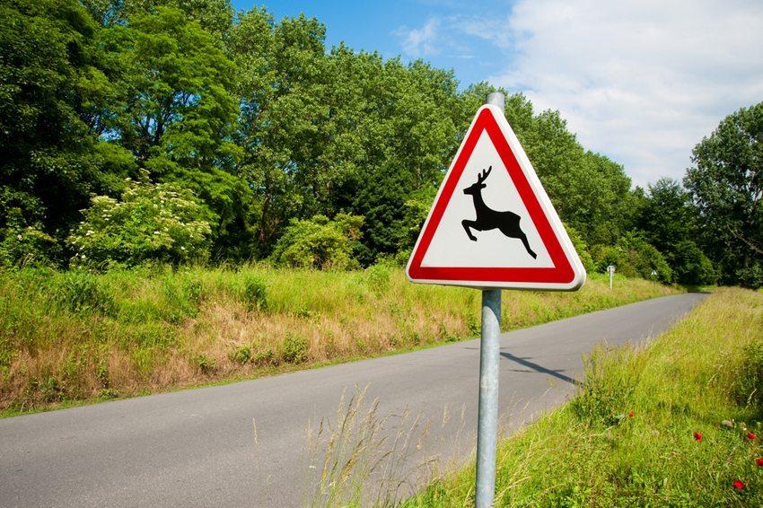 Um das Risiko eines Wildunfalls zu reduzieren, soll man immer auf die Verkehrsschilder achten. (Bild: Jaime Pharr / Shutterstock.com)
