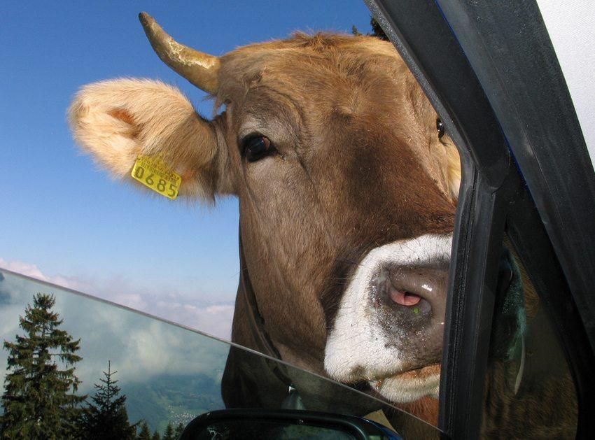 Umweltschützer befürchten, dass die Grand Tour wegen eines hohen Verkehrsaufkommens den Erholungswert ländlicher Highlights der Schweiz gefährden könnte. (Bild: Mike VON BERGEN / Shutterstock.com)