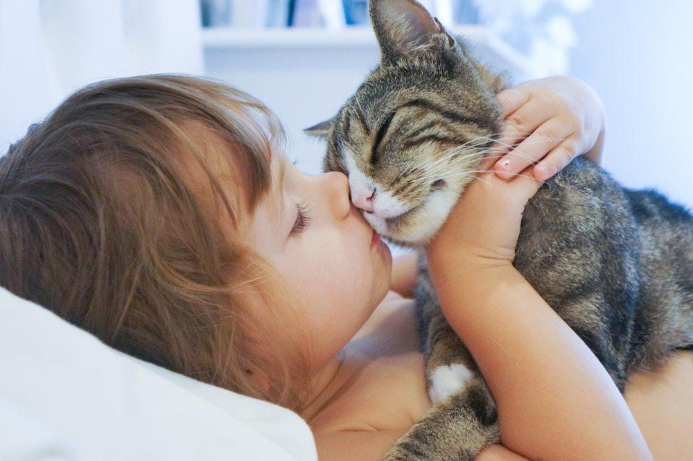 Katzen wollen es sicher und bequem (Bild: © AlenaNex - shutterstock.com)