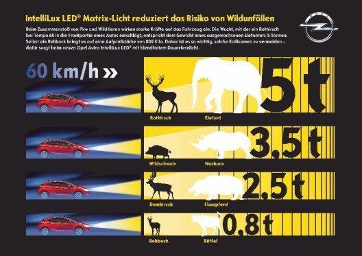 Kollision vermeiden: Unsere heimischen Wildarten bringen es auf Gewichte bis zu 200 Kilogramm, die sich multipliziert um die Geschwindigkeit des fahrenden Autos zu einer Aufprallenergie in Tonnenstärke steigern – so wird aus einem Hirsch quasi ein Elefant. (Bild: © General Motors Suisse SA)