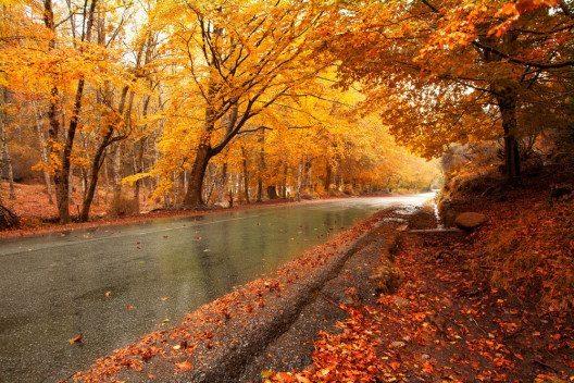 Nasses Laub und Raureif im Herbst verändern das Bremsverhalten extrem. (Bild: cristovao – Shutterstock.com)
