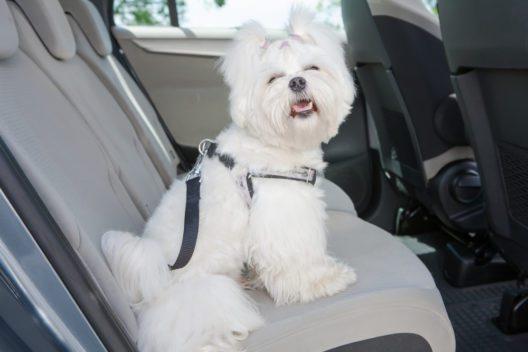 Sicheres Autofahren - auch mit Hund (Bild: © Monika Wisniewska - shutterstock.com)